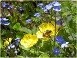 miere din flori de deal